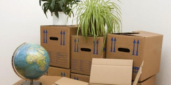 cutii apartament nou feng shui